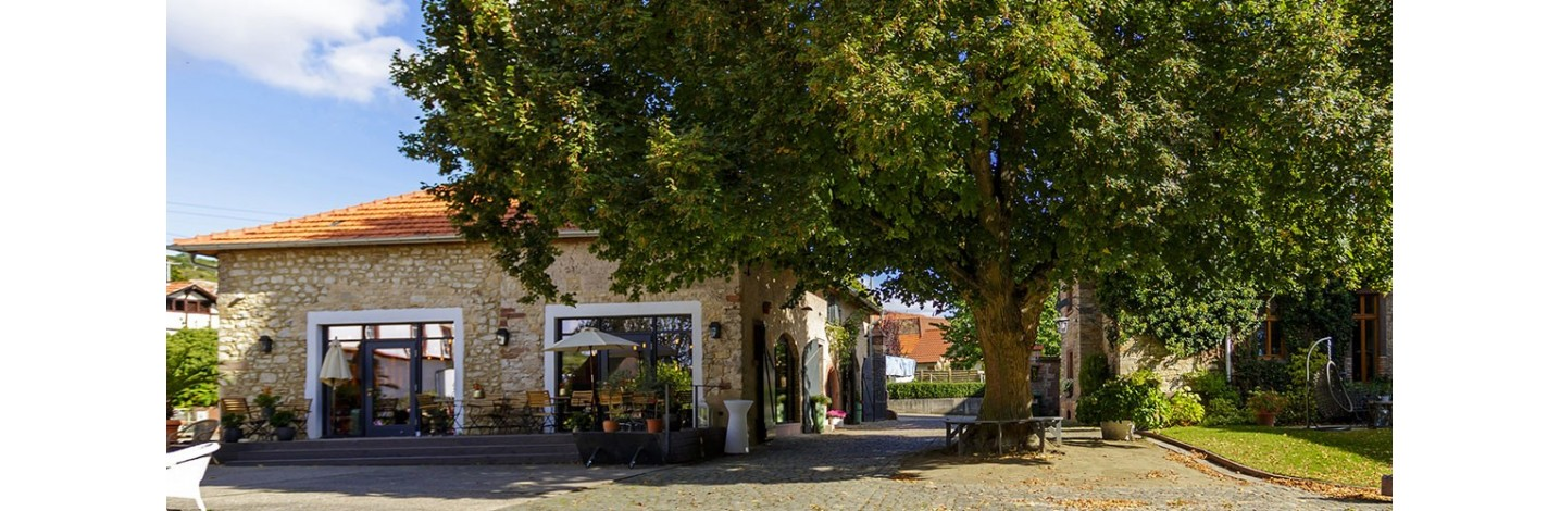 Entdecken Sie die Weine aus dem Zellertal, dem nördlichsten Weinanbauzipfel in der Pfalz